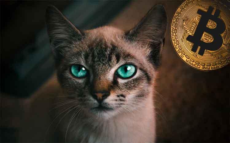 Founder Viabtc Cetuskan Bitcoin Cat